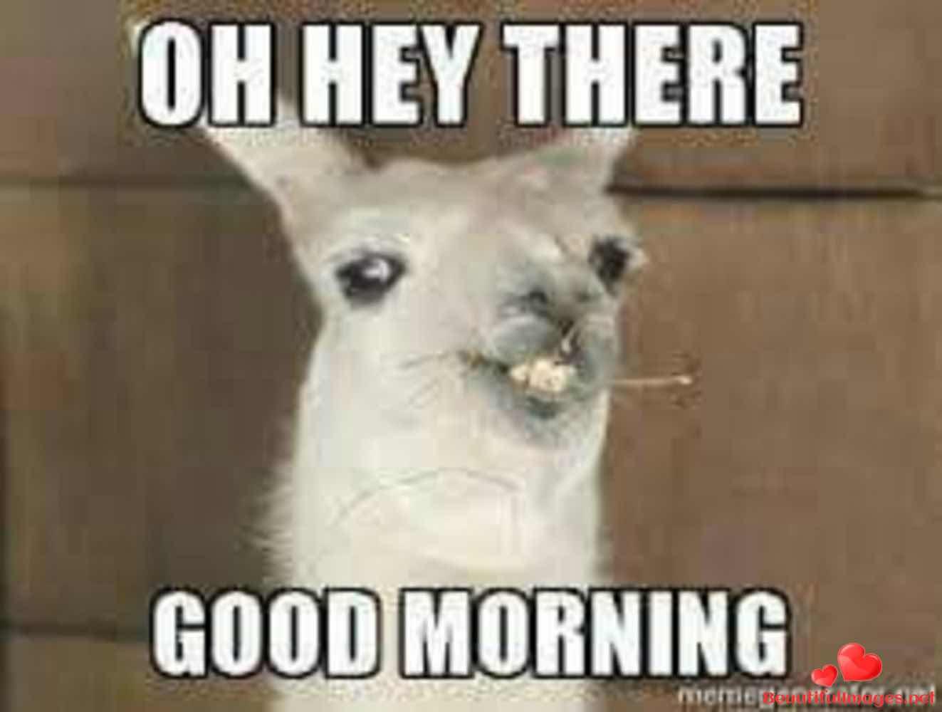 Good-Morning-542