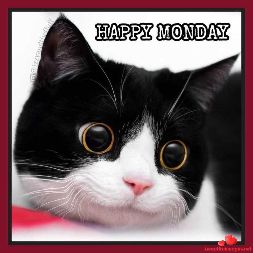Good-Morning-Monday-Whatsapp-Images-436