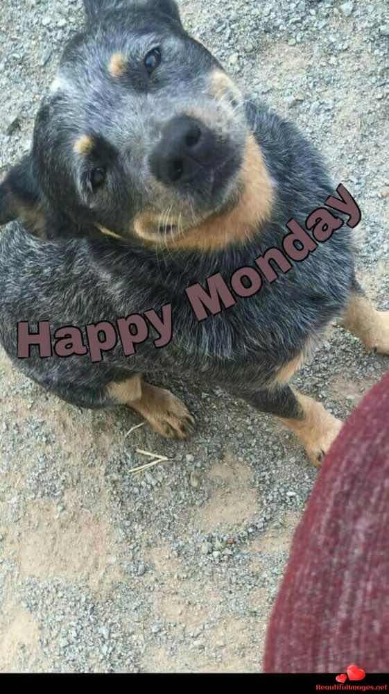 Good-Morning-Monday-Whatsapp-Images-442