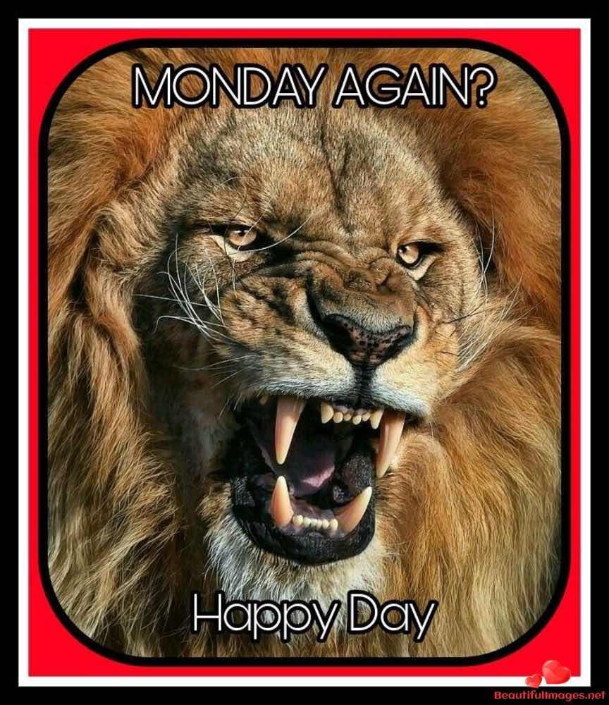 Good-Morning-Monday-Whatsapp-Images-497