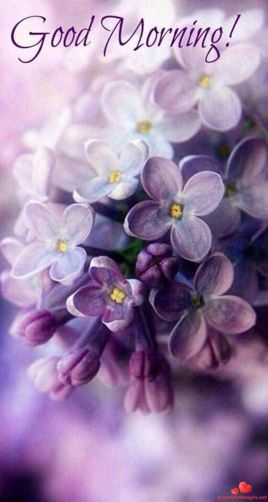 Good Morning Happy Saturday Facebook Whatsapp Images Nice 668