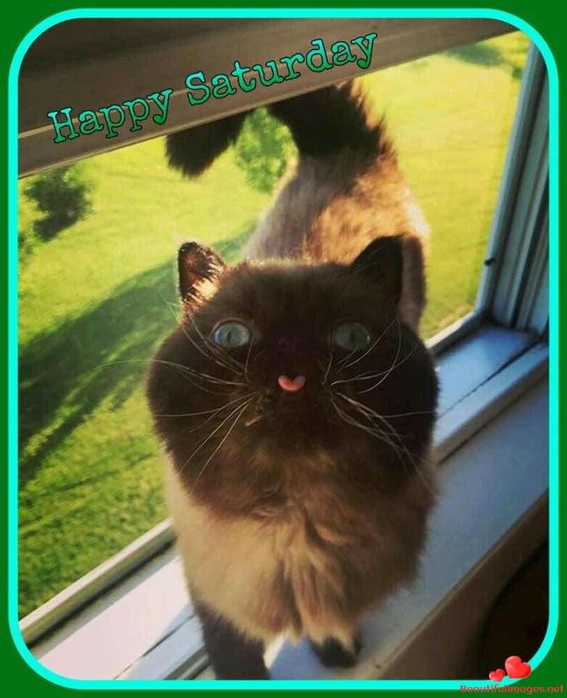 Good-morning-happy-saturday-facebook-whatsapp-images-nice-687