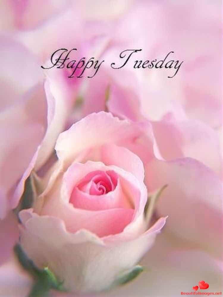 Good-morning-happy-saturday-facebook-whatsapp-images-nice-730
