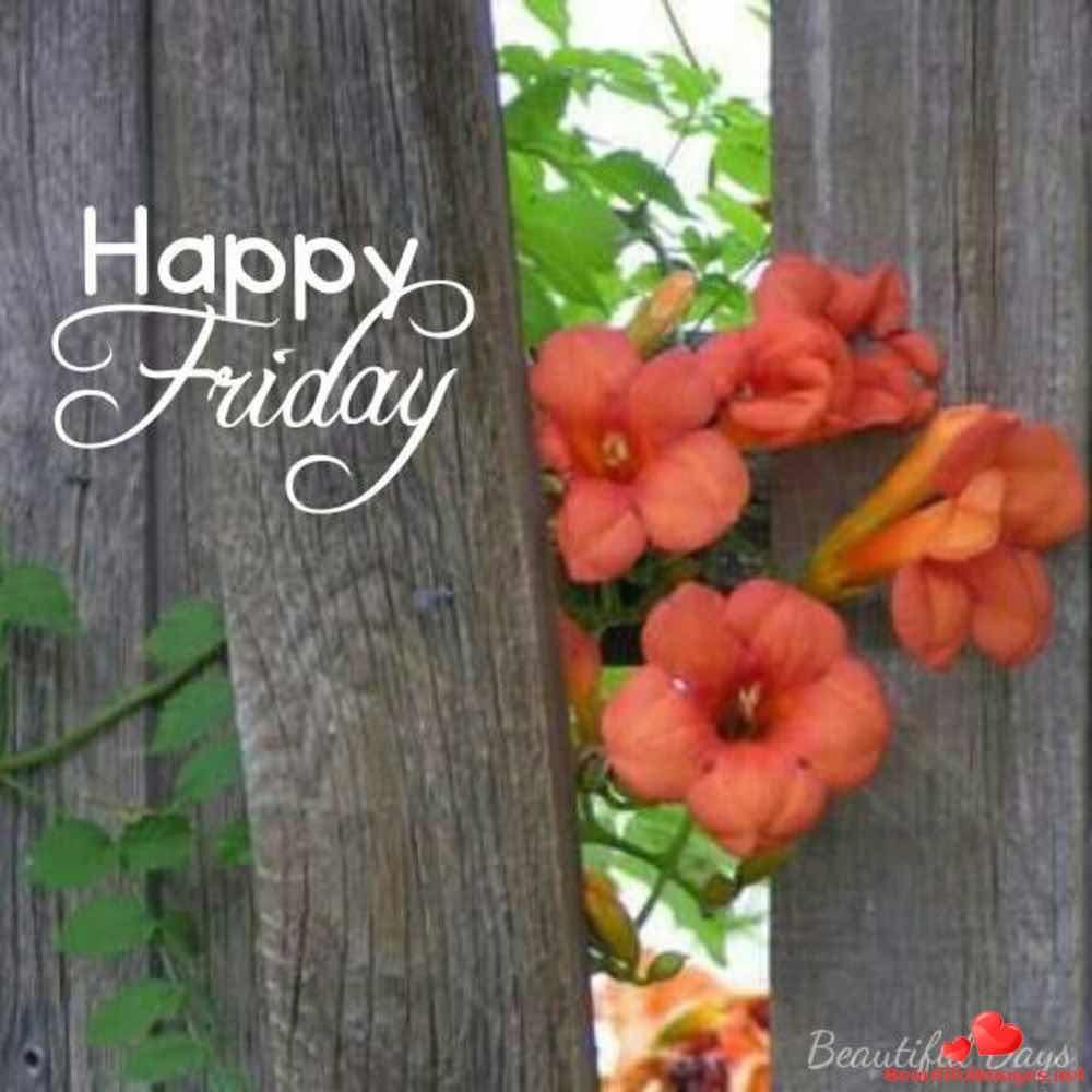 Nice-Good-Morning-Friday-Images-Facebook-Whatsapp-1616