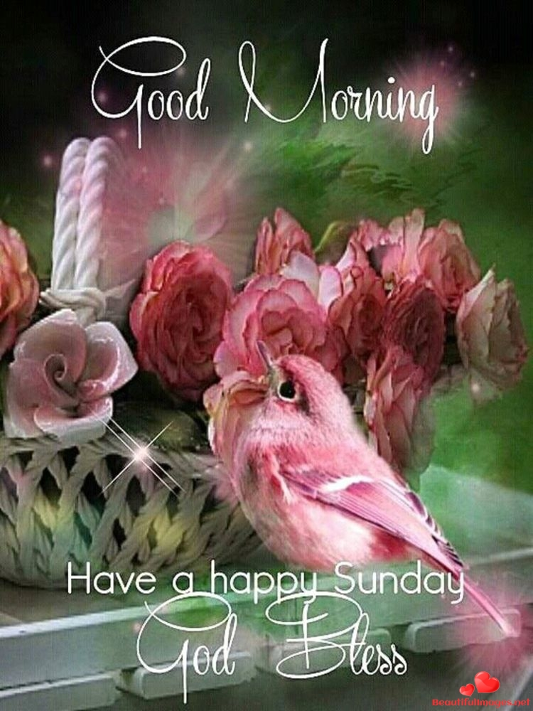 Good Morning With Flowers And Sunday Flowers Healthy