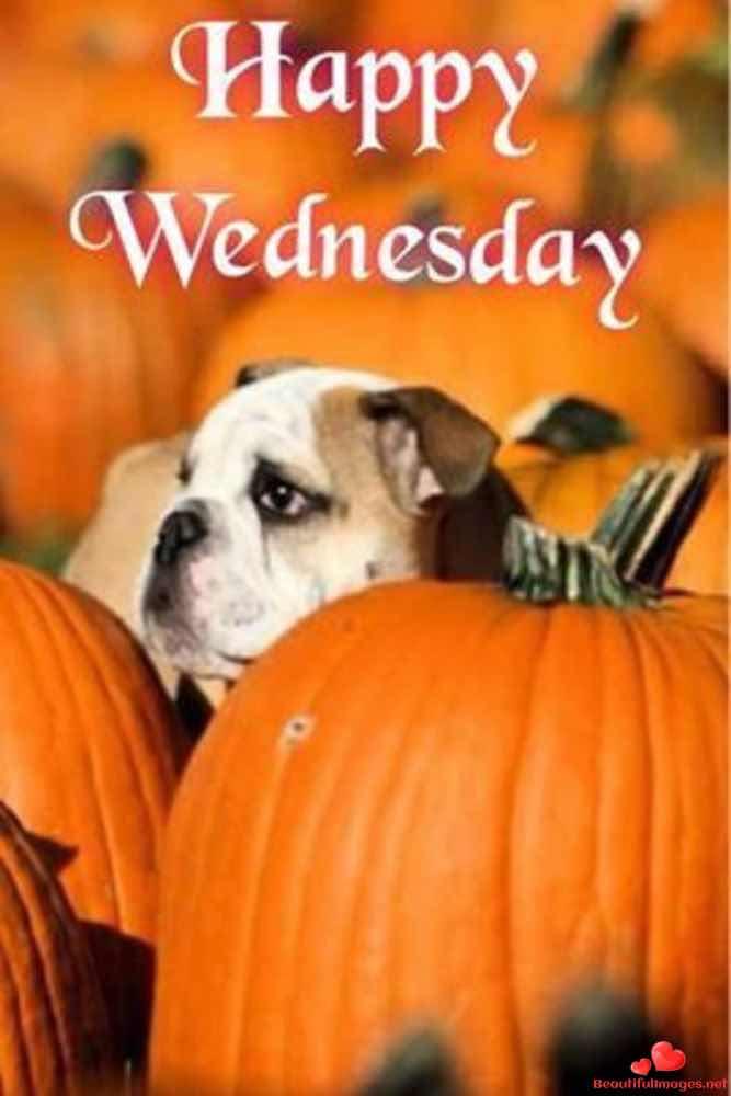 Wednesday-129