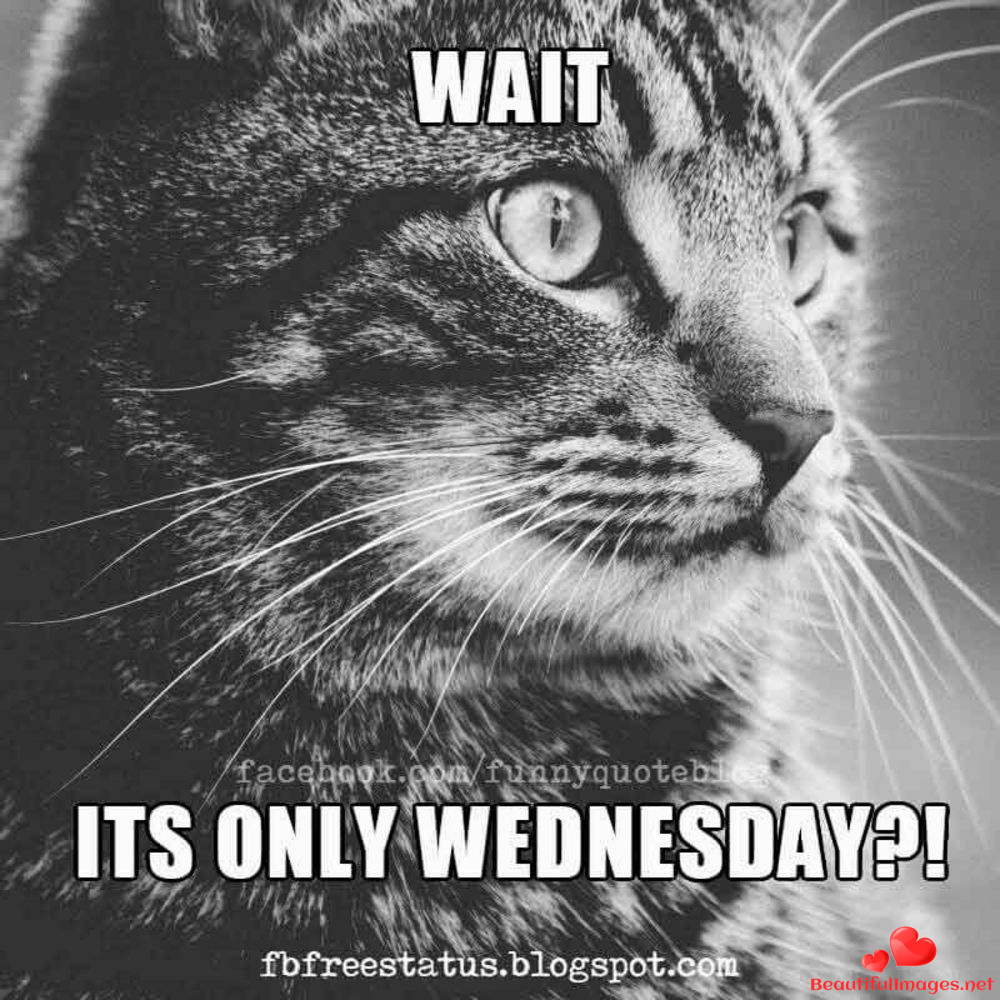 Wednesday-143