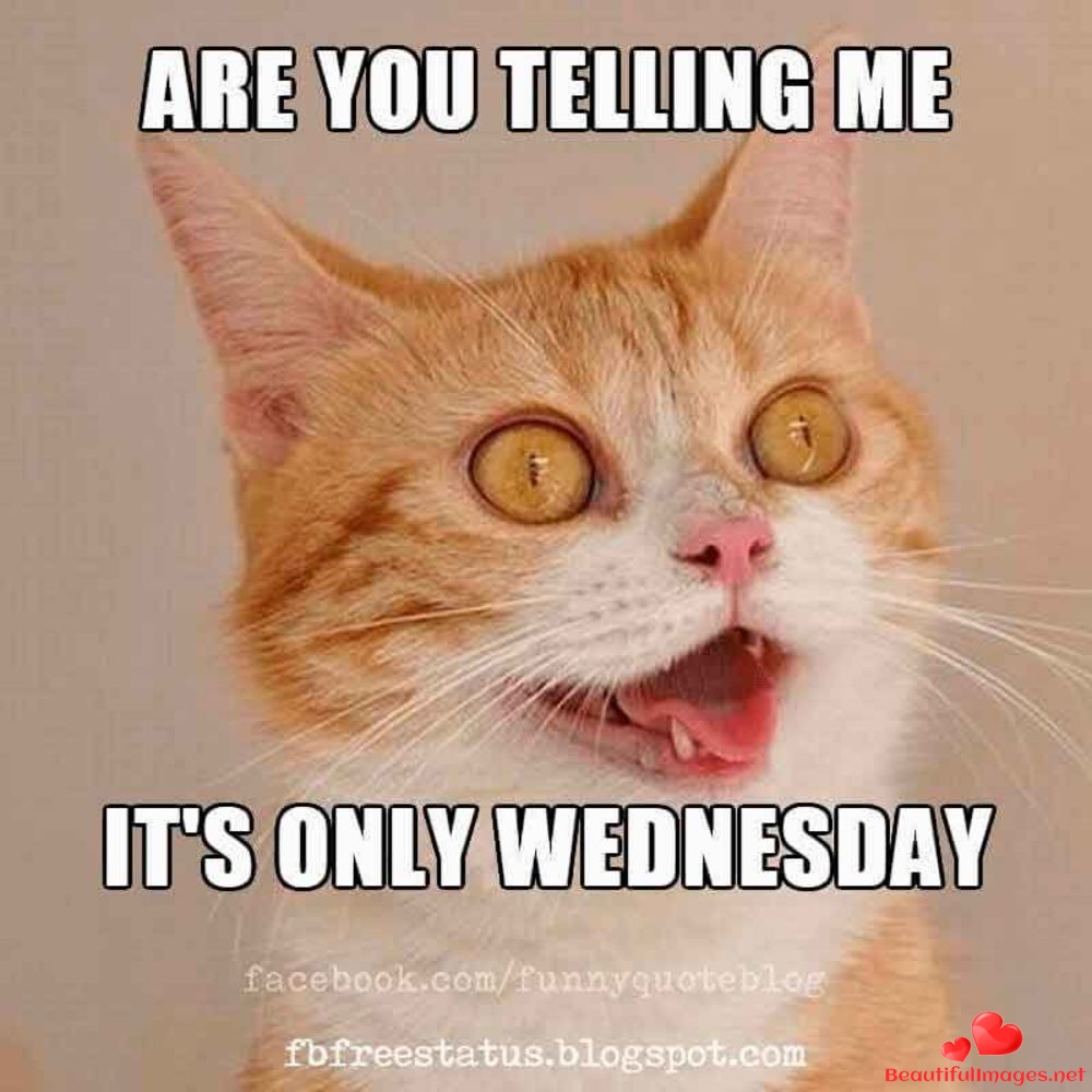 Wednesday-145