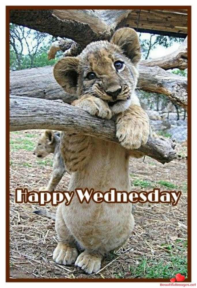 Wednesday-163