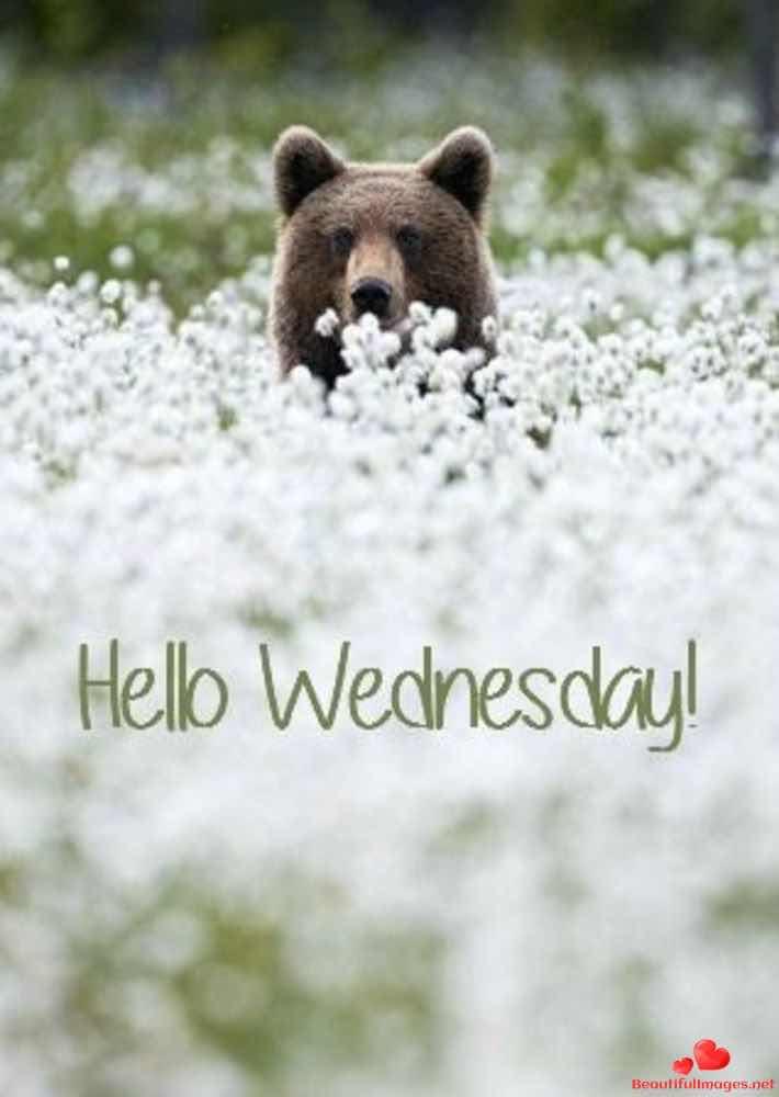 Wednesday-166