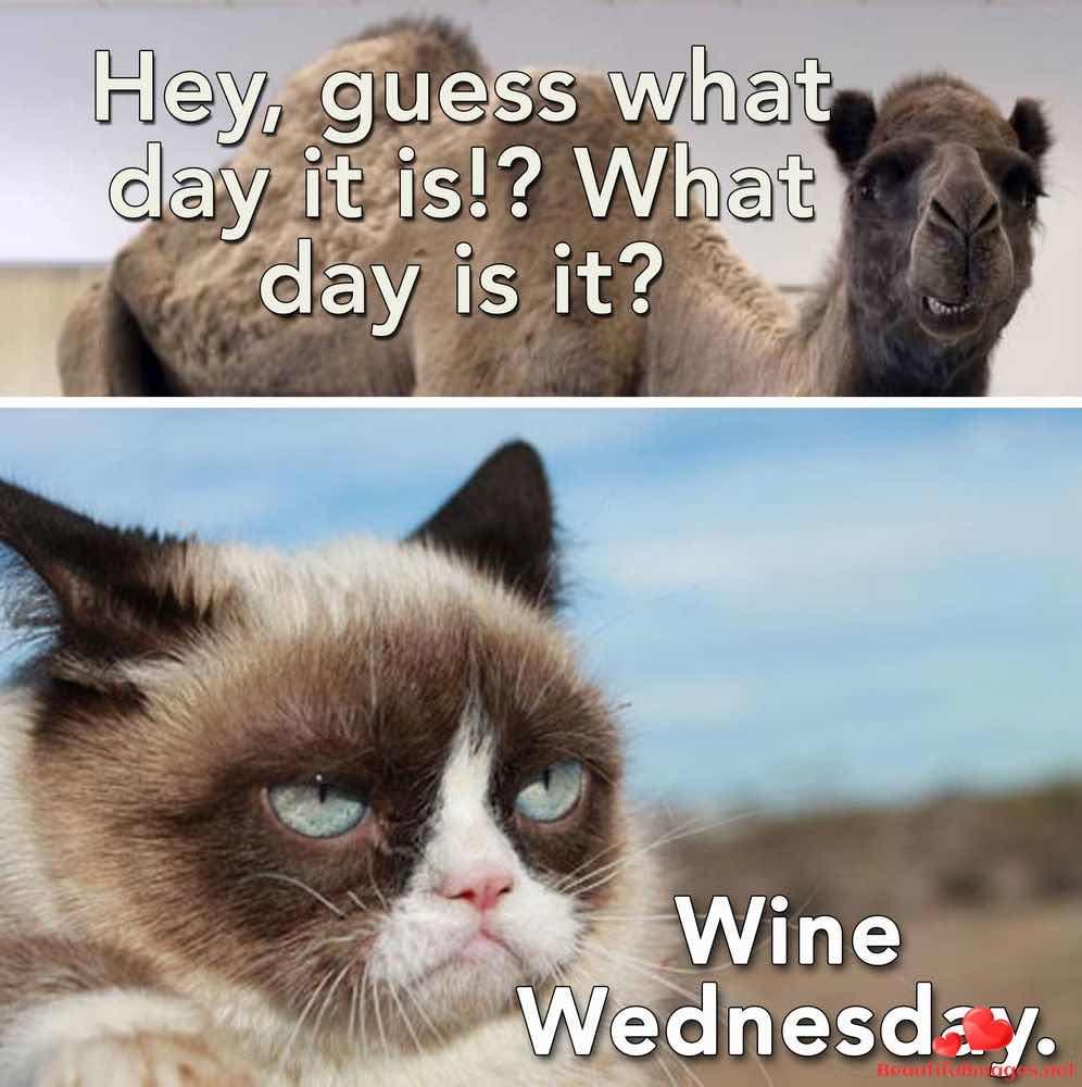 Wednesday-180